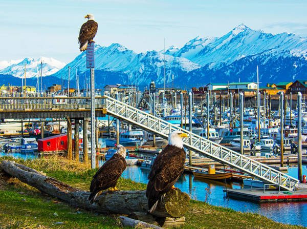 Photograph - Spirit Of Homer Spit Boat Harbor by Debra  Miller