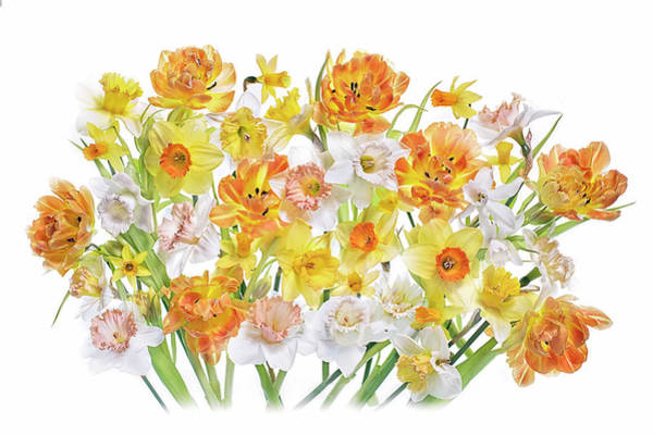 Daffodils Wall Art - Photograph - Spirited by Jacky Parker