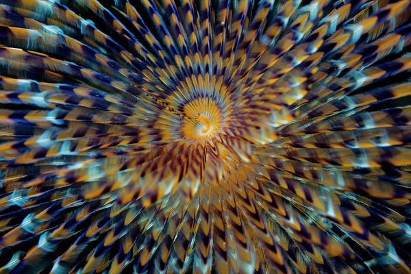 Gill Photograph - Spirograph by Simon V Ila