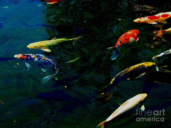 Patzer Photograph - Splash Of Color by Greg Patzer