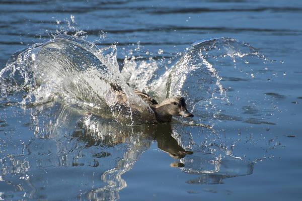 Photograph - Splashdown by Loree Johnson