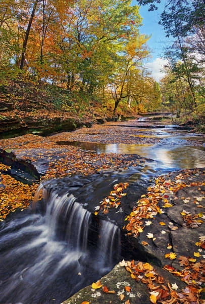 Photograph - Splendor At Skillet Creek by Leda Robertson