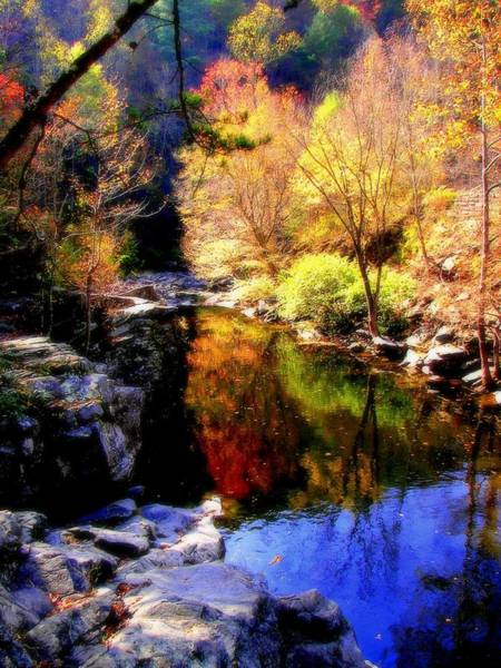 Photograph - Splendor Of Autumn by Karen Wiles