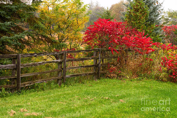 Photograph - Split-rail Fence Under Colorful Trees by Les Palenik