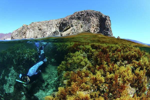 Snorkel Photograph - Split Snorkel by  548901005677