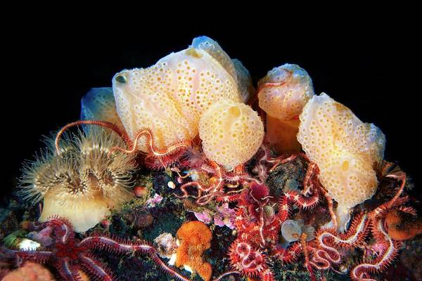 Hydrozoan Photograph - Sponges And Marine Animals by Alexander Semenov/science Photo Library