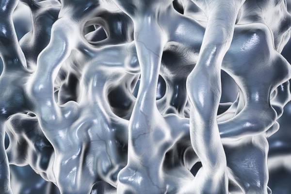 3d Visualization Photograph - Spongy Bone by Kateryna Kon/science Photo Library
