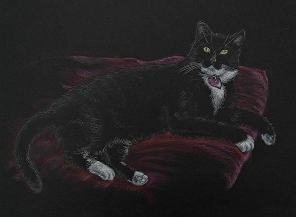 Spooky The Cat Art Print