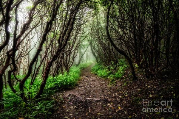 Photograph - Spooky Trail by Deborah Scannell
