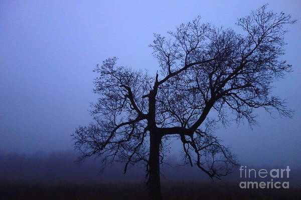 Photograph - Spooky Tree by Jacqueline Athmann