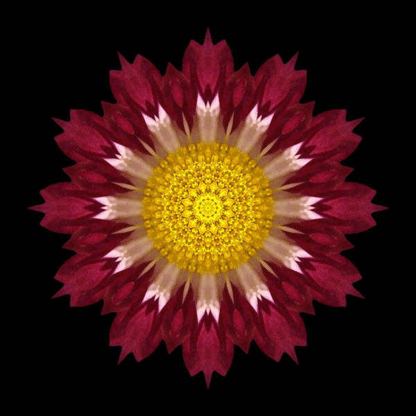 Photograph - Spoon Chrysanthemum I Flower Mandala by David J Bookbinder