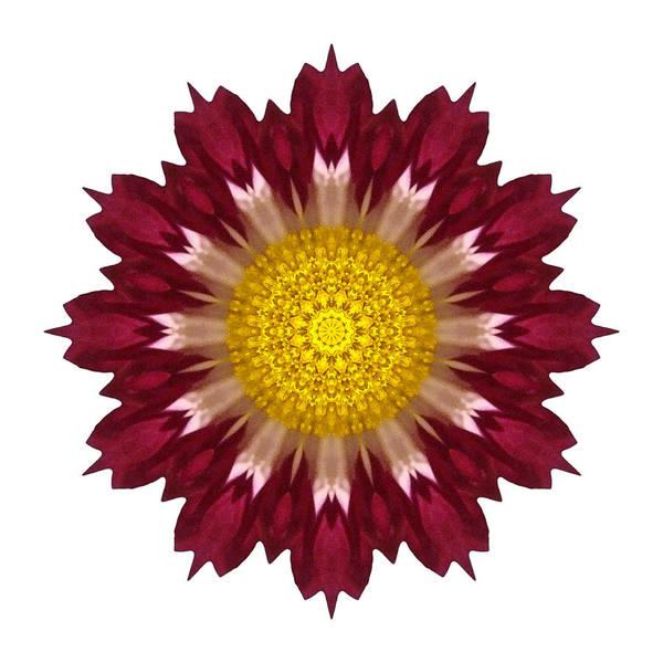 Photograph - Spoon Chrysanthemum I Flower Mandala White by David J Bookbinder