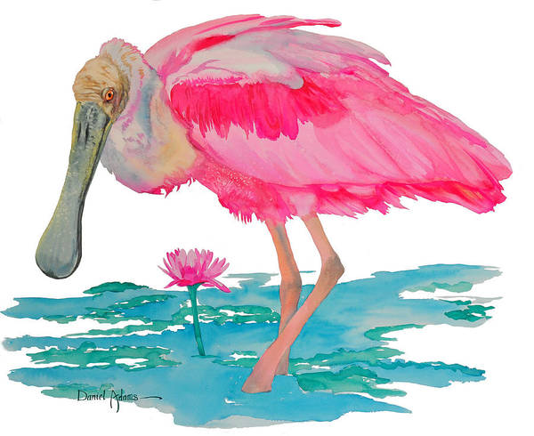 Painting -  Da212 Spoonbill Wading By Daniel Adams by Daniel Adams