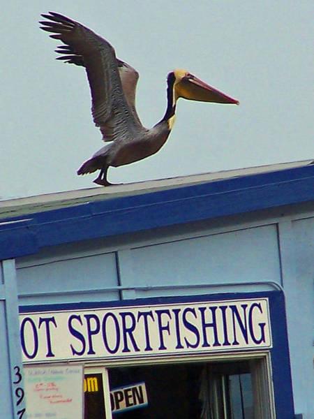 Photograph - Sportfishing by Jennifer Robin