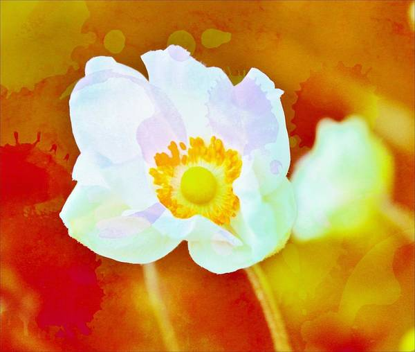 Wall Art - Photograph - Spot Of Color by Cathie Tyler
