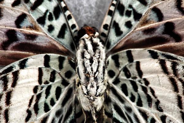 Photograph - Spots by John Rizzuto