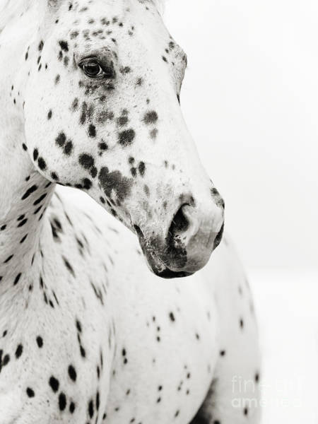 White Horse Wall Art - Photograph - Spots by Stephanie Moon