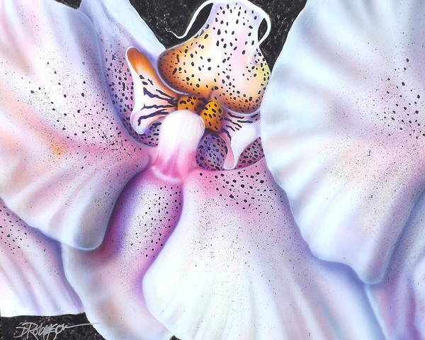 Painting - Spotted Orchid by Darren Robinson