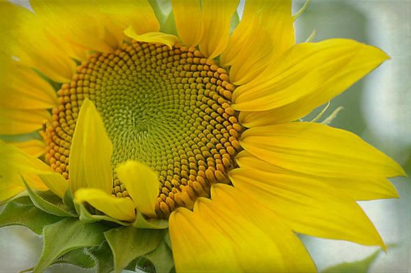 Sunflower Seeds Photograph - Spread A Little Sunshine by Fraida Gutovich