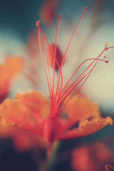 Stamens Photograph - Spread The Love by Laurie Search