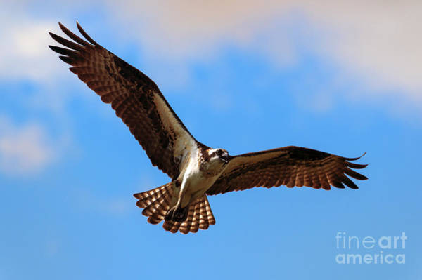 Soar Photograph - Spread Your Wings by Mike  Dawson