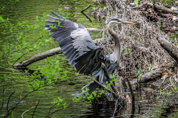 Photograph - Spreading His Wings by Eleanor Abramson
