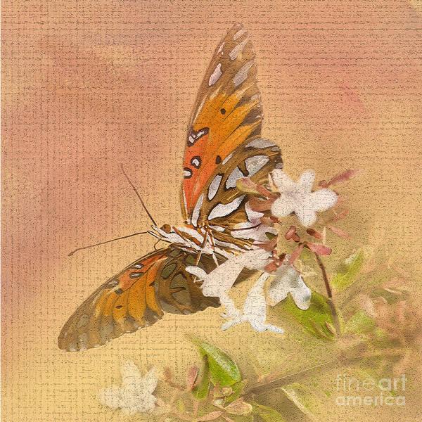 Gulf Fritillary Wall Art - Photograph - Spreading My Wings by Betty LaRue