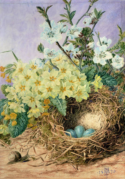 Wild Flowers Drawing - Spring, 1879 by Fanny Jane Bayfield