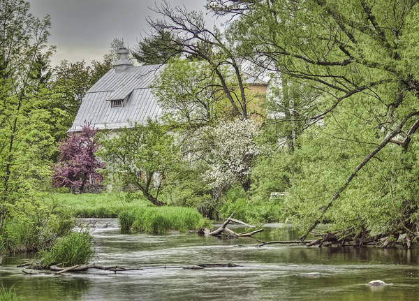 Photograph - Spring Arrives At The Rose Farm by Thomas Young