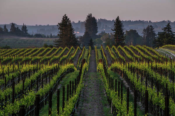 Sonoma Photograph - Spring Arrives Early In California Wine by George Rose