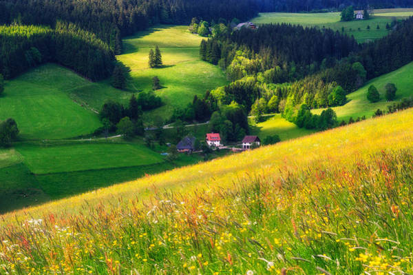 Photograph - Spring At Black Forest by Shuwen Wu