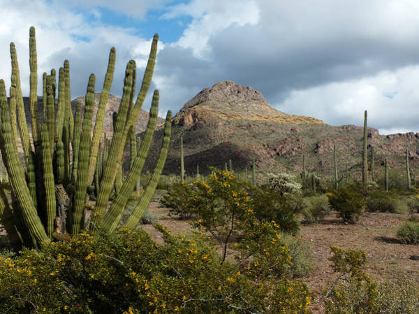 Photograph - Spring At Organ Pipe National Monument by Lucinda Walter