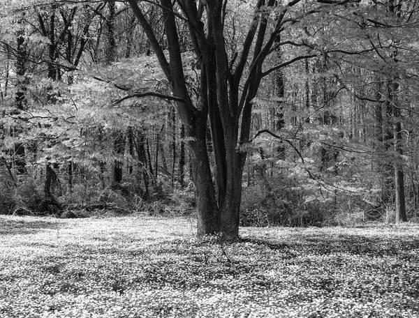 Photograph - Spring At The Arboretum by Chris Scroggins