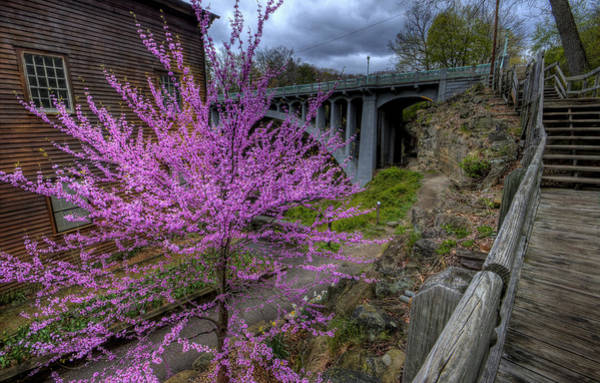 Photograph - Spring At The Mill by David Dufresne