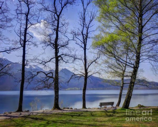 Photograph - Spring Awakening by Edmund Nagele