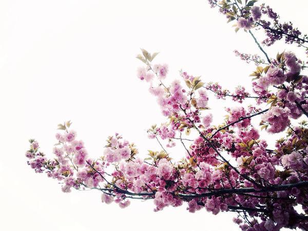 Photograph - Spring Awakening by Natasha Marco