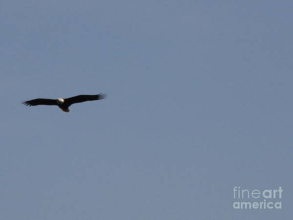 Wall Art - Photograph - Spring Bald Eagles 2013 Xiii by Daniel Henning