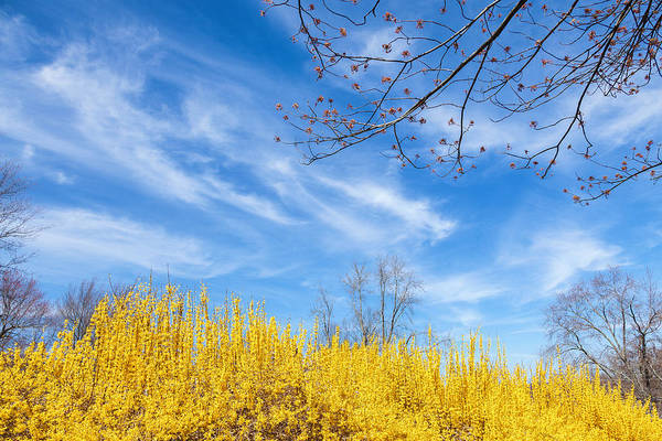Photograph - Spring by Bill Wakeley