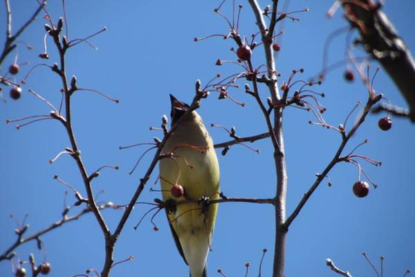 Photograph - Spring Bird Singing by Anita Burgermeister