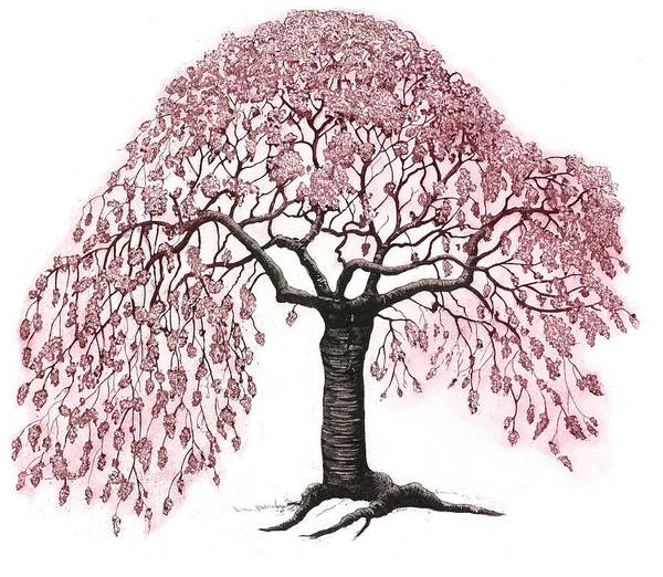 Blooming Tree Drawing - Spring Blossom, 2010, (etching/aquatint) by Jane Peart