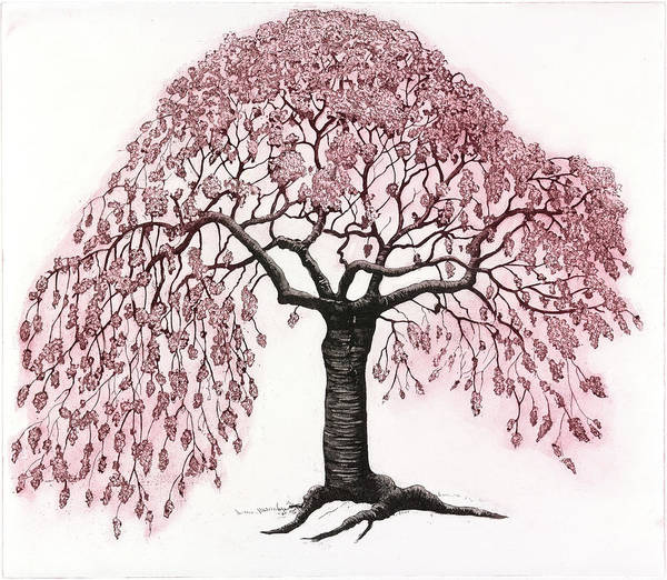 Blooming Tree Drawing - Spring Blossom, 2012, (etching/aquatint) by Jane Peart
