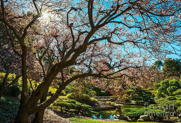 Wall Art - Photograph - Spring Blossom Star by Jamie Pham