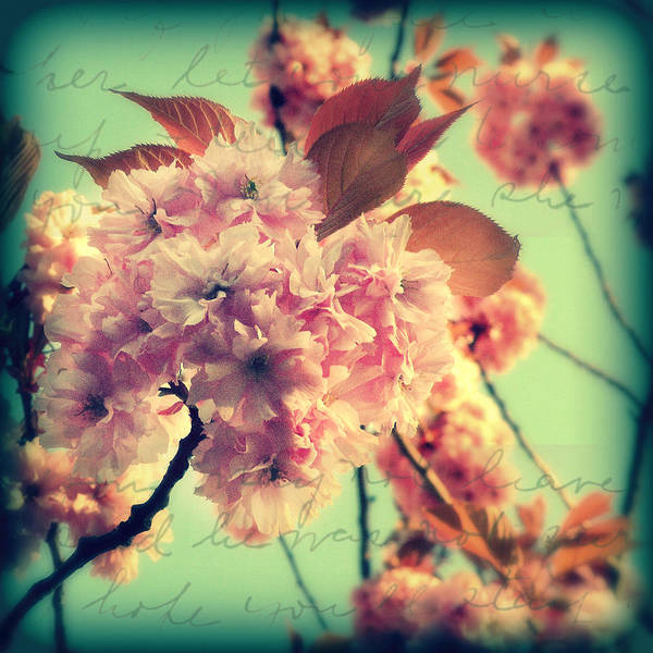 Photograph - Spring Blossoms 2 by Micki Findlay