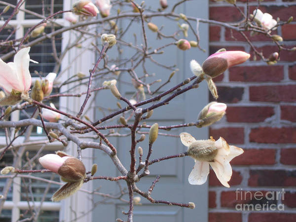 Wall Art - Photograph - Spring Blossoms In Yorktown  Virginia by Marlene Robbins