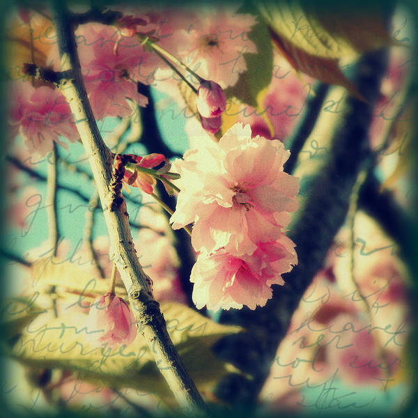 Photograph - Spring Blossoms by Micki Findlay