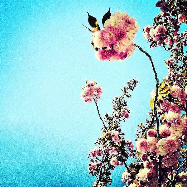 Photograph - Spring Blossoms by Natasha Marco