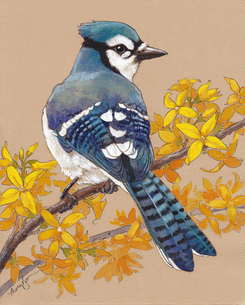 Forsythia Painting - Spring Blue Jay 3 by Tracie Thompson
