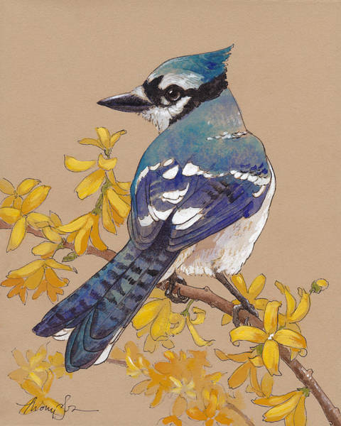 Forsythia Painting - Spring Blue Jay by Tracie Thompson