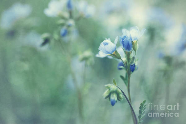 Ladders Photograph - Spring Blues by Priska Wettstein