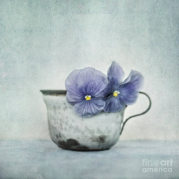 Wall Art - Photograph - Spring Blues With A Hint Of Yellow by Priska Wettstein